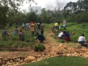 實地栽種 香草園